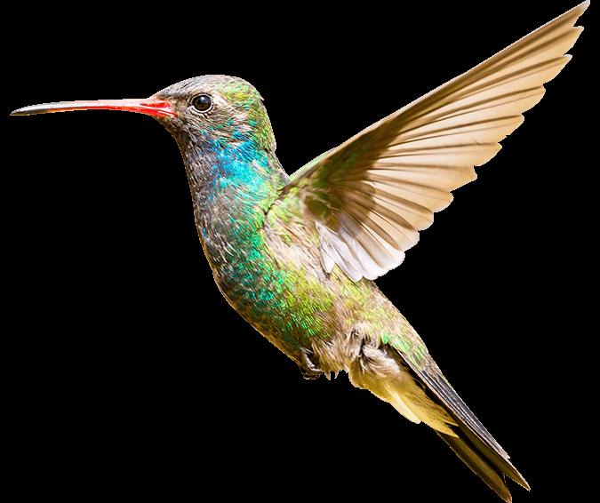 Zymr Banner hummingbird-2